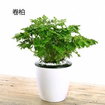天猫绿戏 自吸水盆栽 多款可选